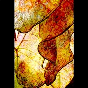 Abstract leaf print. 8x10 find art archival print